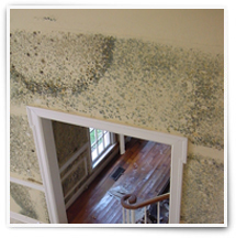 Mold Inspection in Santa Barbara County